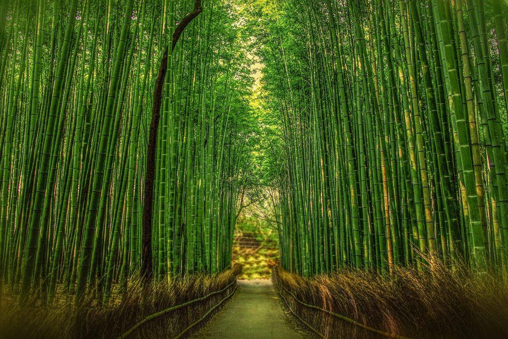 京都 Kyoto Orderプラン